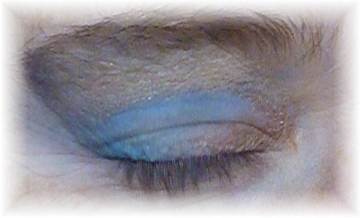 Morticia Halloween Blaue Augen